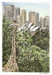 Giraffe Taronga Zoo Simon Fieldhouse 1 104x150 Sydney Architecture (City)